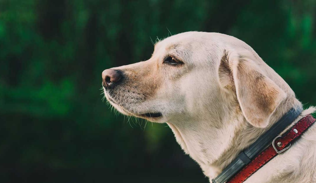Who Takes Responsibility After a Dog Bite?